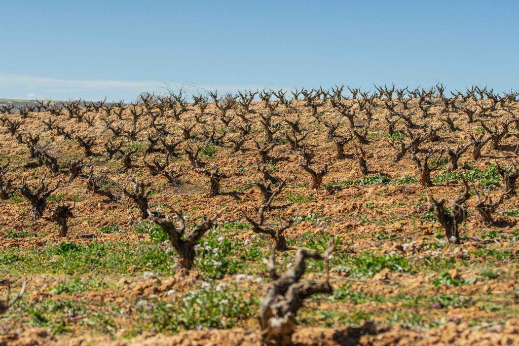 Viticultura regenerativa en Tres Piedras