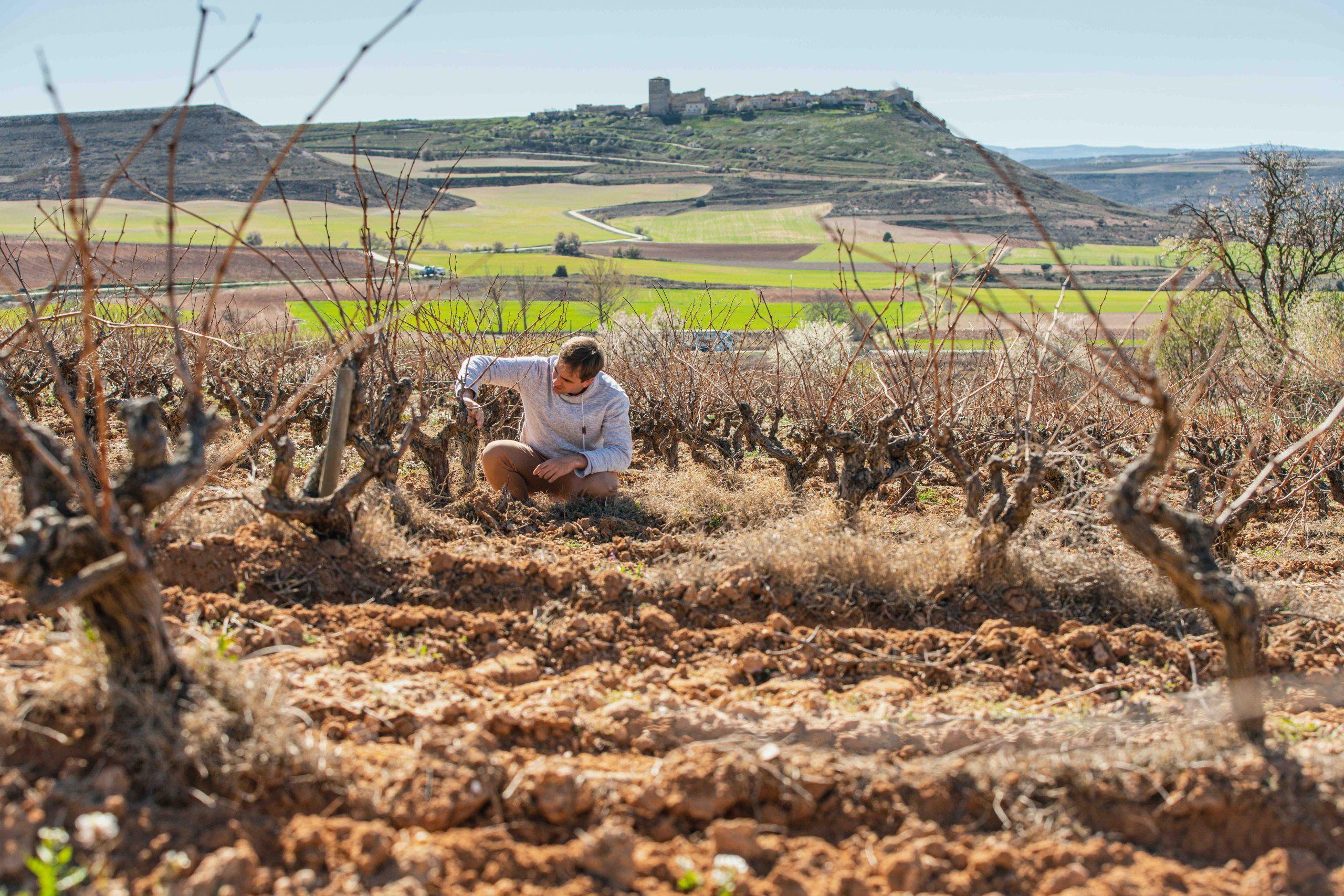 Fuentecén, tradición en el mundo del vino