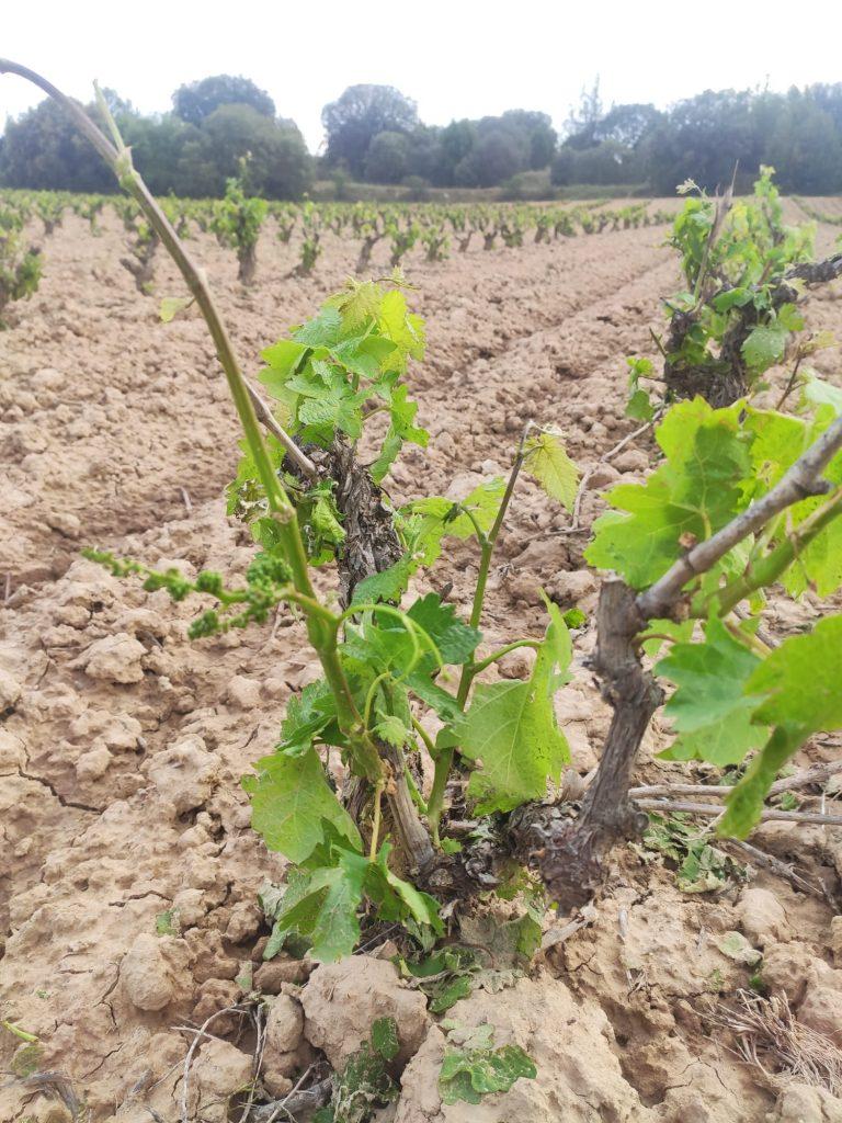 Granizo en el viñedo, medidas